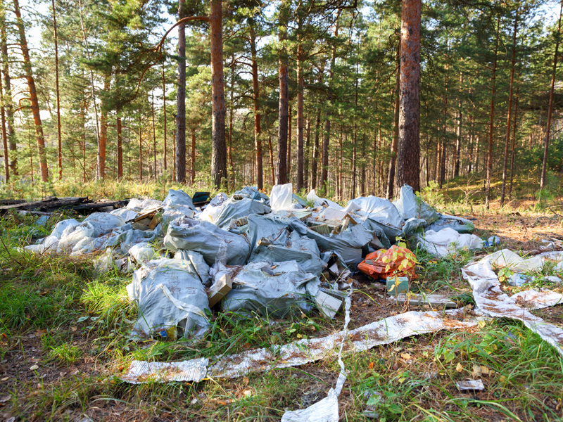 Rubbish and litter illegally dumped in a forest