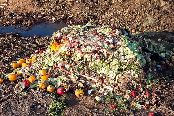 Food waste compost combats NSW weeds