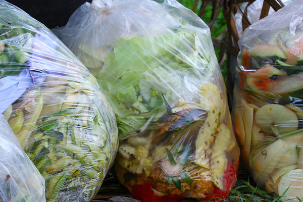 Woolworths partners with Sydney Zoo to rescue food waste