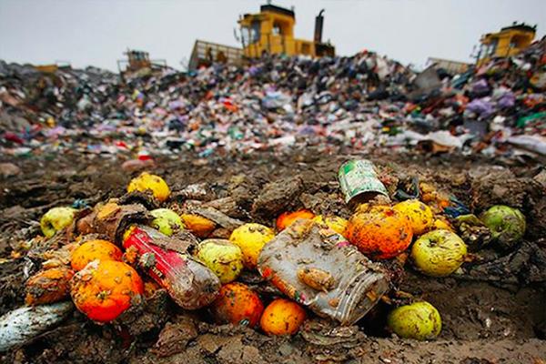 Fed Govt announces $4M food waste body