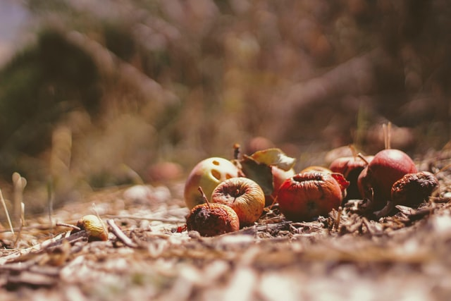 SA food waste strategy launched