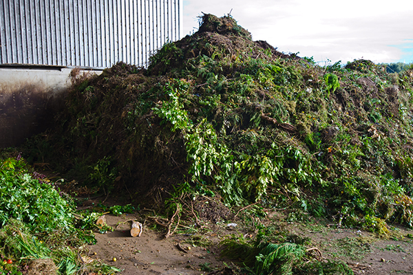 Zero-waste event for VWMA's international composting week